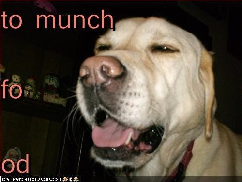 Cheezburger Image