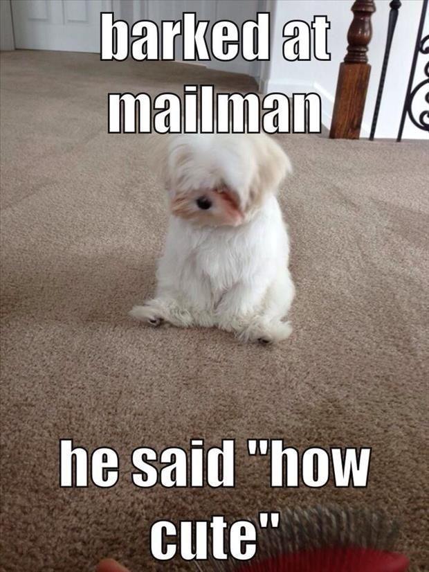 Furry Funnies Pinterest