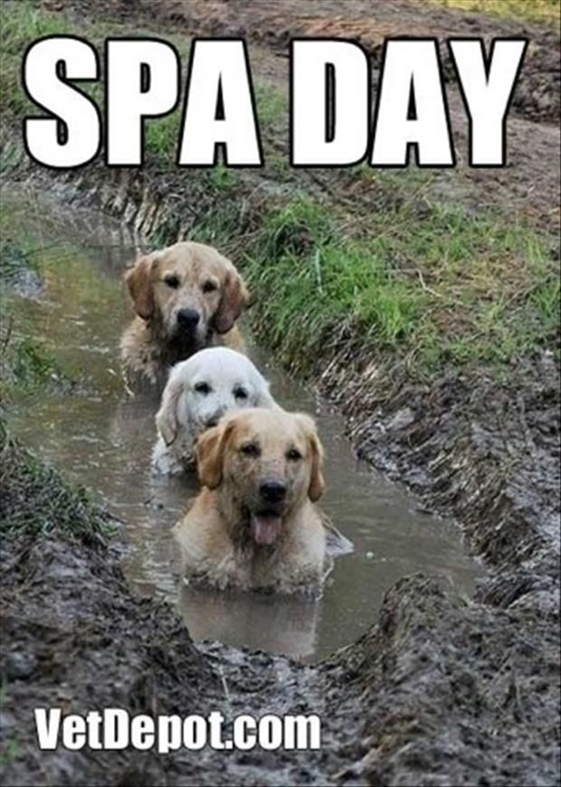 a spa day for dogs