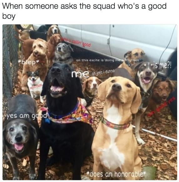 100 Dog Memes That Will Keep You Laughing For Hours