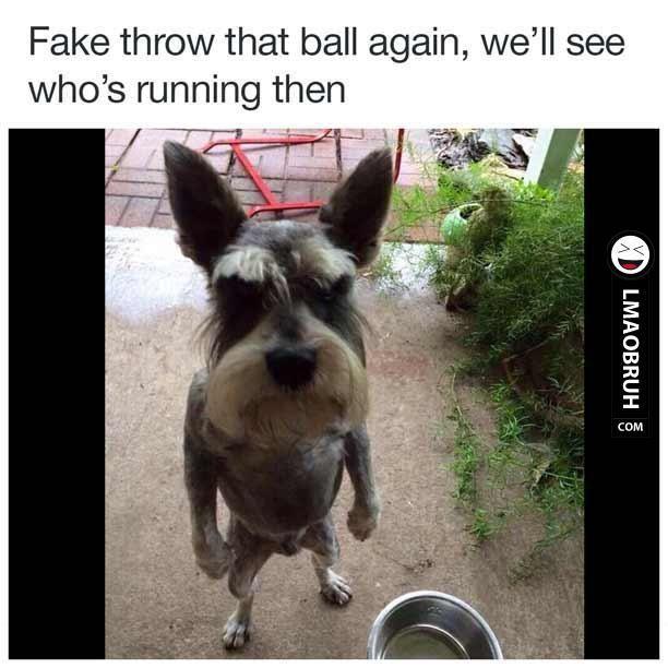 fake throw the ball again Google Search