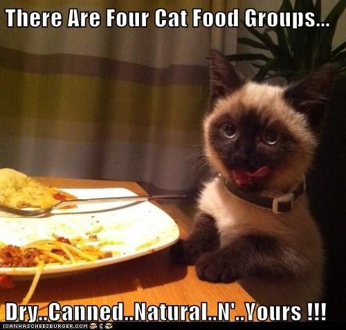 food groups cat food funny