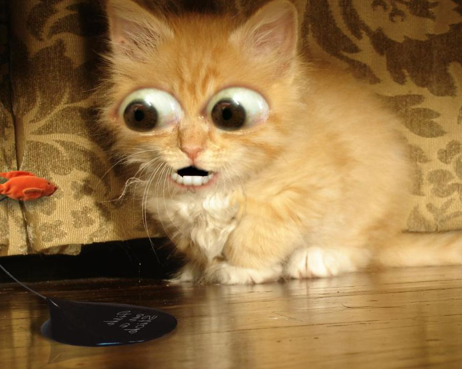 Funny Cat Pic Wallpapers 056