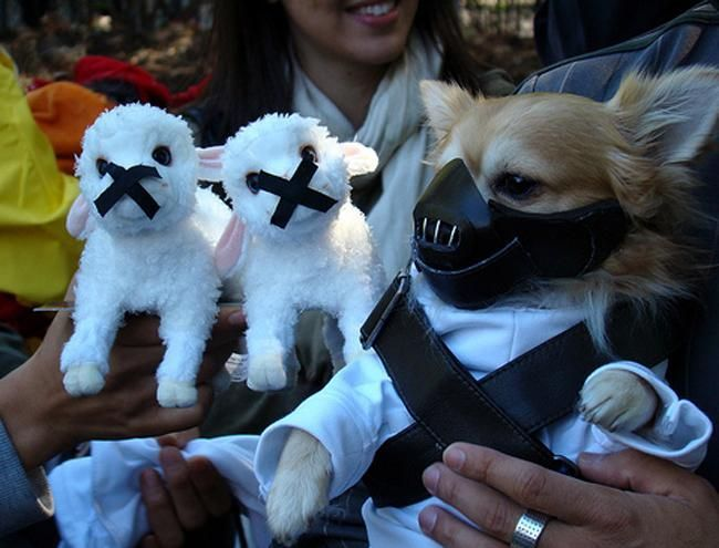 Silence of the Lambs Animal Costumes Funny Animals Funny Dogs Cute Animals