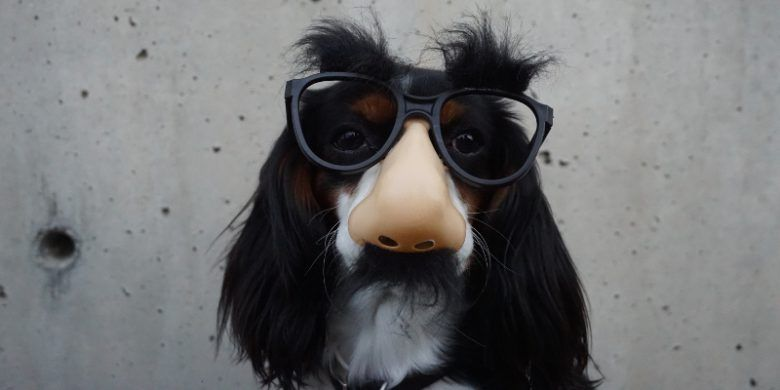 Funny dog with glasses