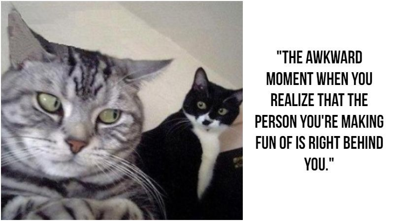 These 55 Funny Cat Memes Will Make You Laugh Right MEOW