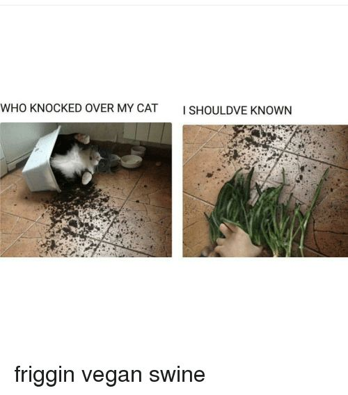 Vegan Dank Memes and Cat WHO KNOCKED OVER MY CAT ISHOU LDVE KNOWN