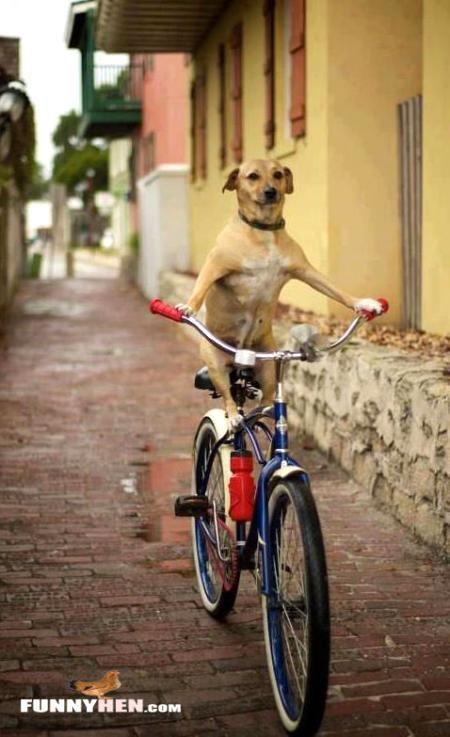 Dog cycling THECYCLINGBUG CO UK thecyclingbug cycling bike funny