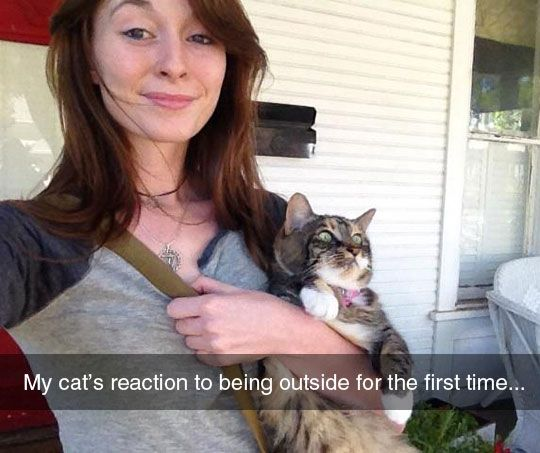 funny cat outside first time girl owner