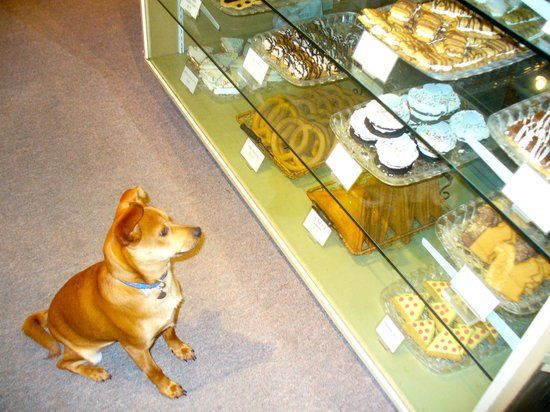 Decadent Dogs South Haven 2019 All You Need to Know BEFORE You Go with s TripAdvisor