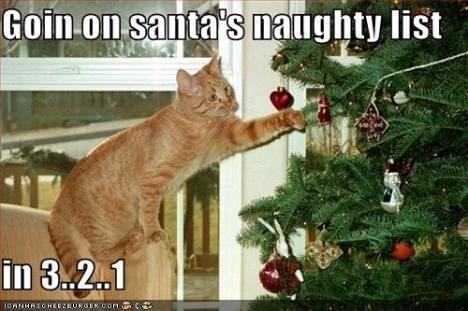 Naughty Christmas Cat Looks familiar Jenna Farmer Brackett