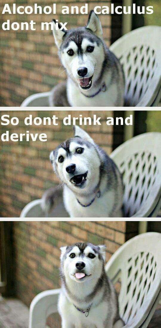 Pun Husky Funny Husky Jokes Dog Memes Funny Husky Funny Jikes