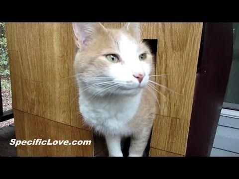 Building a Winter Cat House DIY Pets