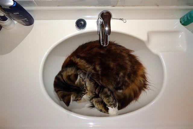 cat sleeping at the basin