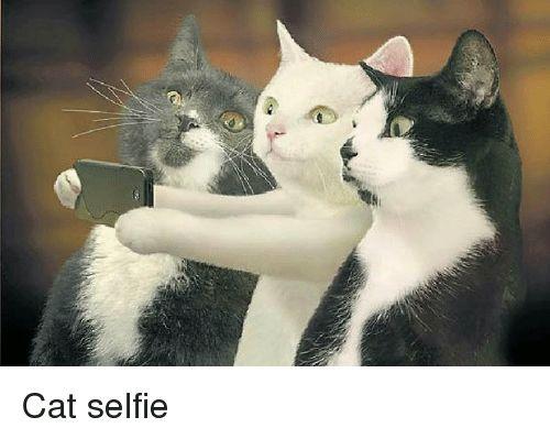Funny Selfie and Cat Selfie Cat selfie