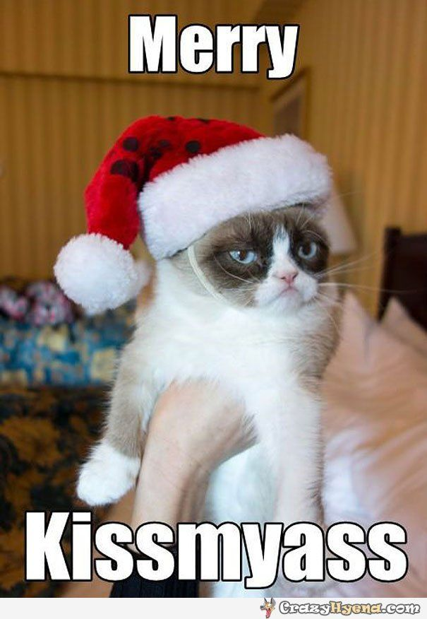 merry kissmyass grumpy cat funny picture