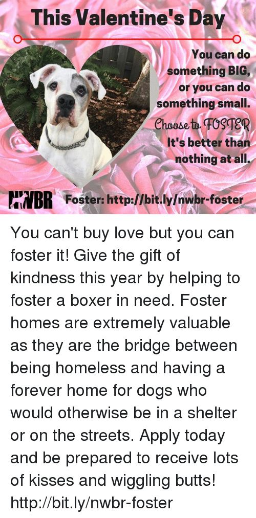 Dogs Homeless and Love This Valentine s Day You can do something BIG