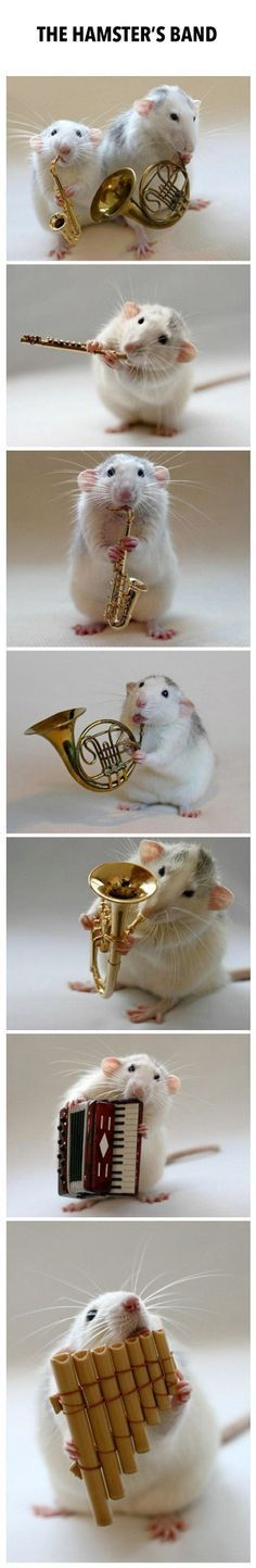 Introducing The Hamster Band Cute Rats Cute Funny Animals Cute Baby Animals