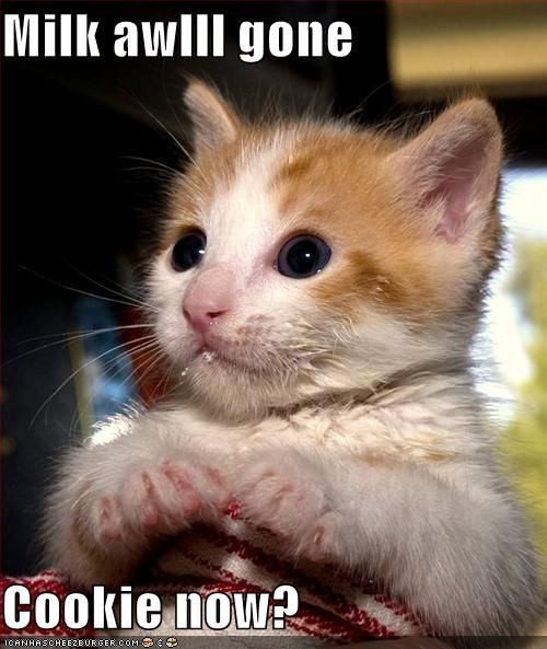 Funny Picture Clip Best funny cat pictures Funny captions n Cat picture LOLcaption