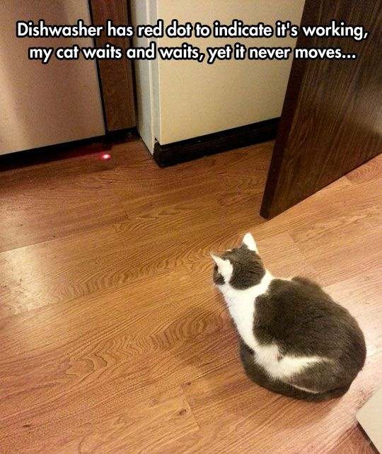 funny cat waiting red dot