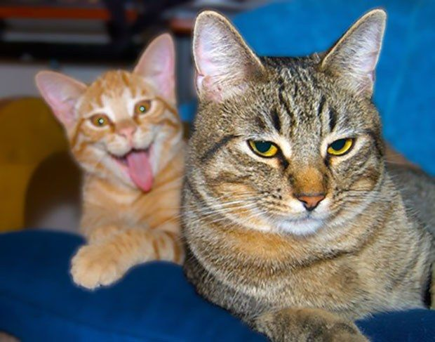 Hilarious ing Cats Proving What Assholes They Can Be