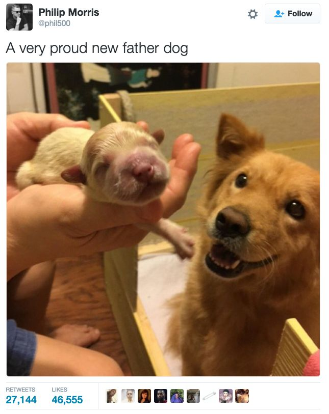 32 The Most Wholesome Things That Have Ever Happened Dog Cute