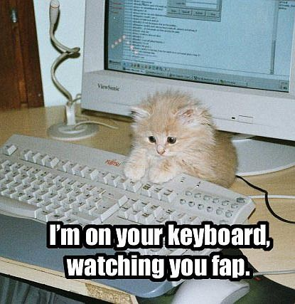 funny cat pictures pc 4