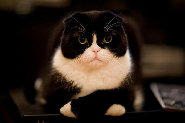 funny cat pictures funny black and white cat