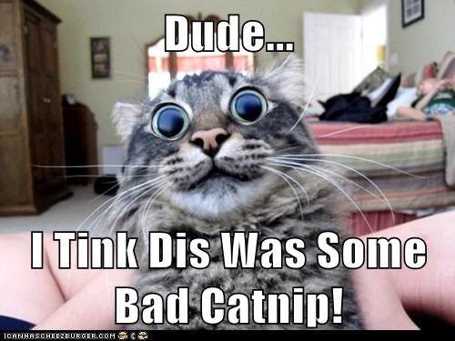 bad catnip Cats