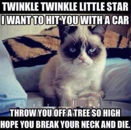 cat funny and grumpy cat image