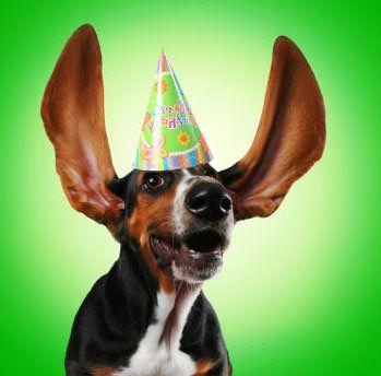 happy dog wearing birthday hat