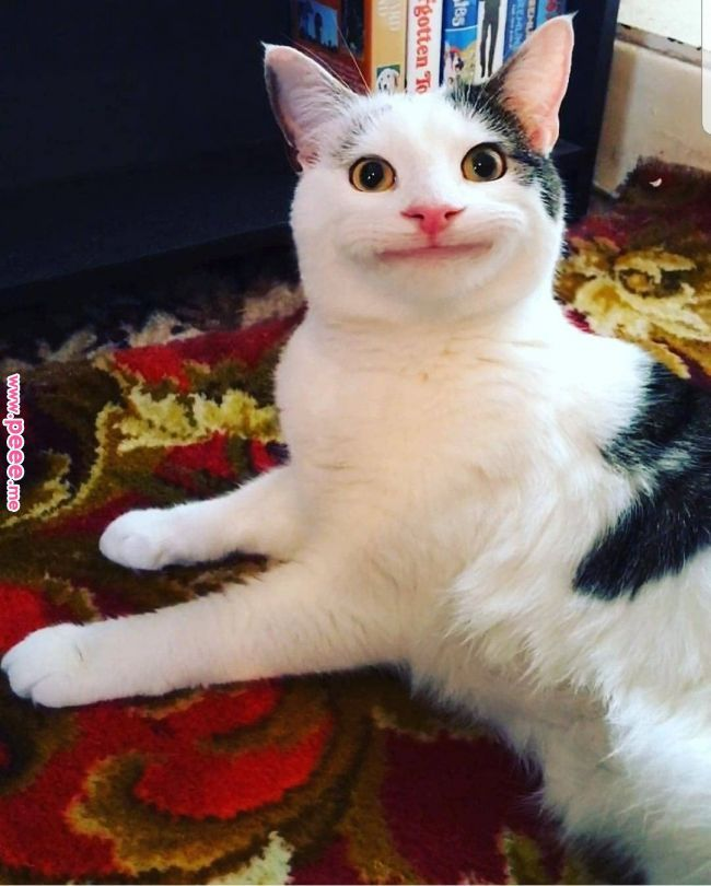 Talk about smiling like the cat that caught the canary Anxiete Pinterest