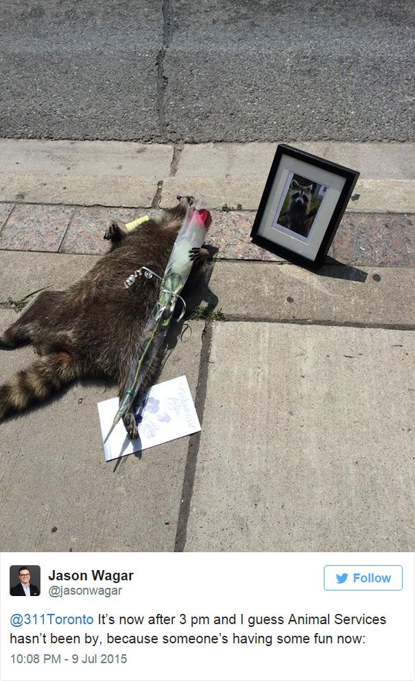 dead raccoon memorial shrine mourning deadraccoonto 2