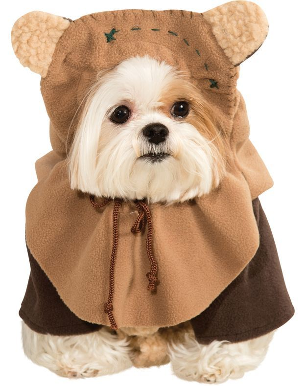 23 Dog Models Who Are Already So Done With Halloween