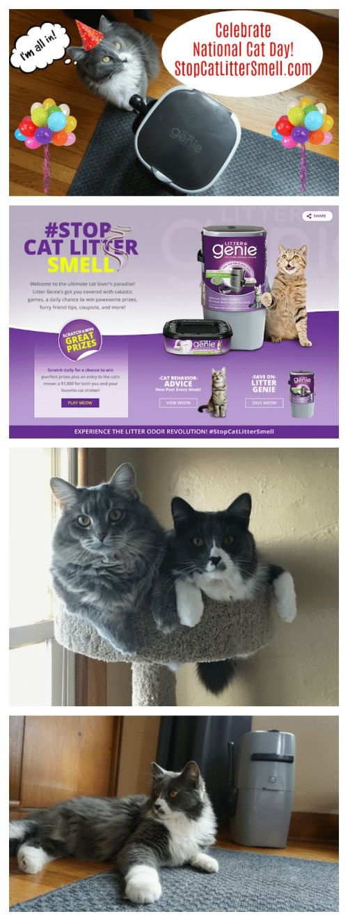 Happy National Cat Day Check out the new Stop Litter Smell web site You can enter for a chance