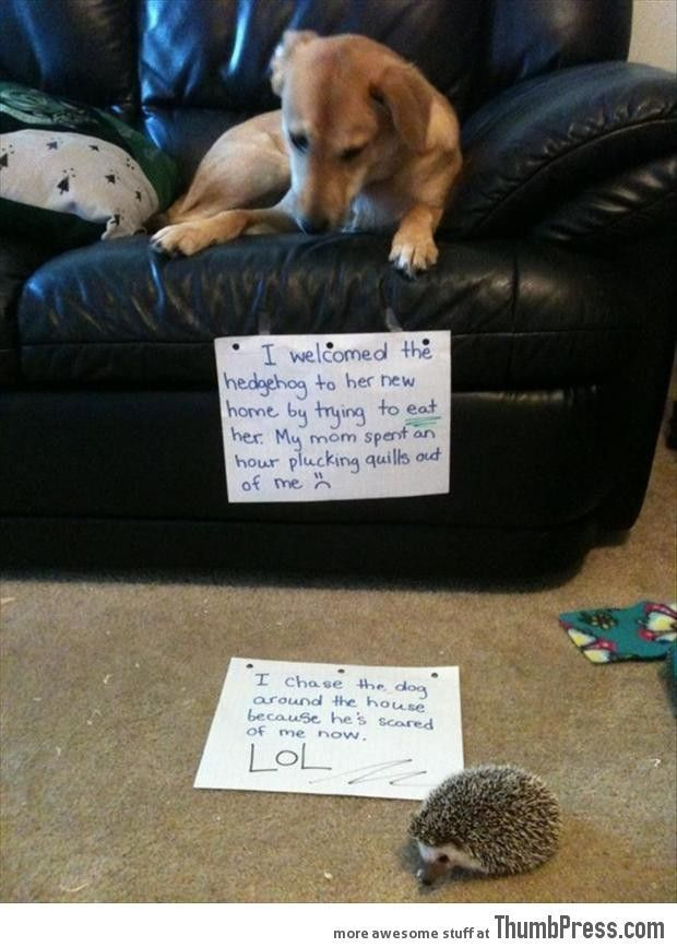 Dogs with Notes The best of Dog Shaming 50 Funny