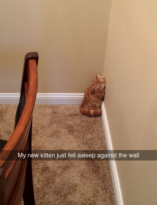 Tastefully fensive on Tumblr Cats And Kittens Funny Kittens Cute Cats Cute Funny