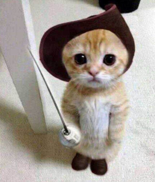 TOP 30 Cute Cats – Cute Cat 30