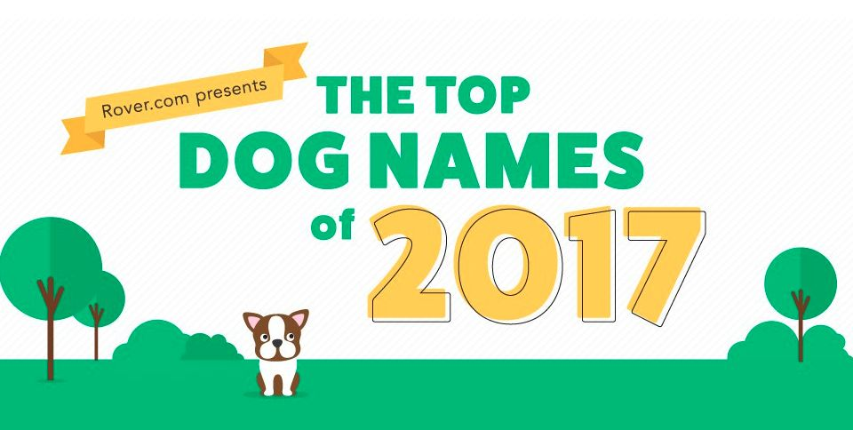 Top 100 Male and Female Dog Names of 2017