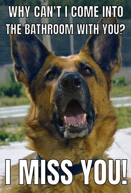Funny Dog Meme with a German Shepherd Dog dogs explore Pinterest""