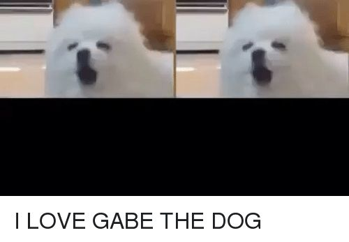Dogs Love and Relatable I LOVE GABE THE DOG