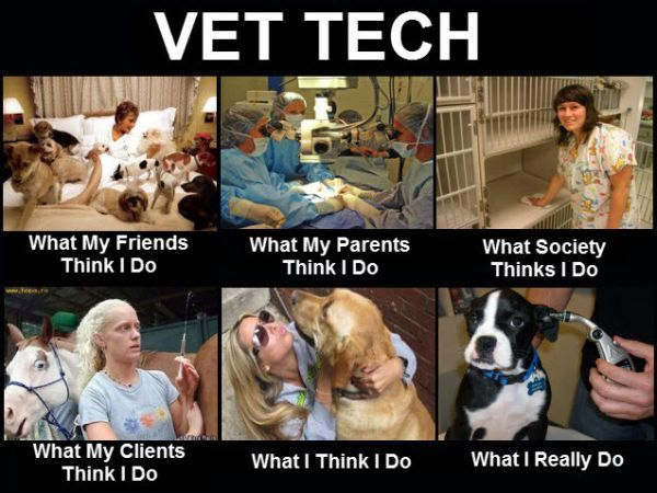Catch the Wonderful Funny Pictures Dog at Vet