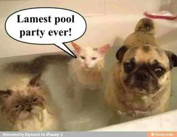 Cat and dog pool party