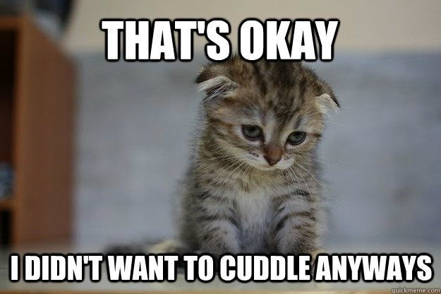 Cute Cats · Oh noooo My heart Going to cuddle with my baby boy stat