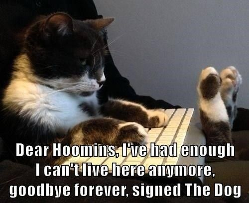 """This drawing """"Dear Hoomins"""" is taken from in pinterest Funny Cat Jokes 3"""
