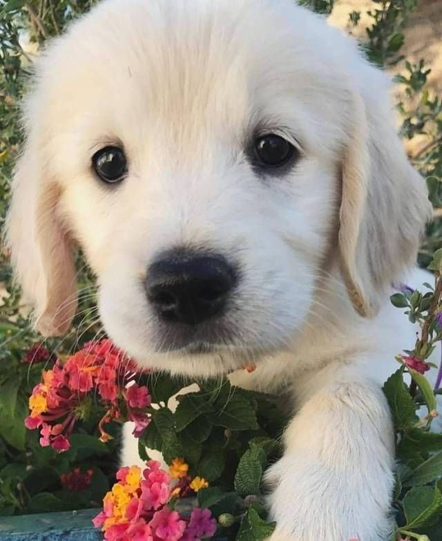 The Cutest Puppy The Day 20 pics Viralovers puppycuteness
