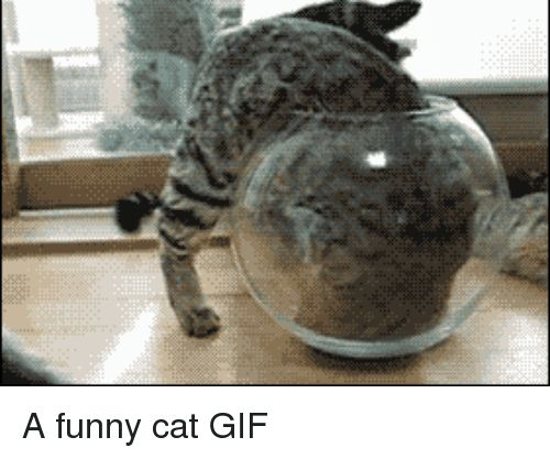 Funny Gif and Cat