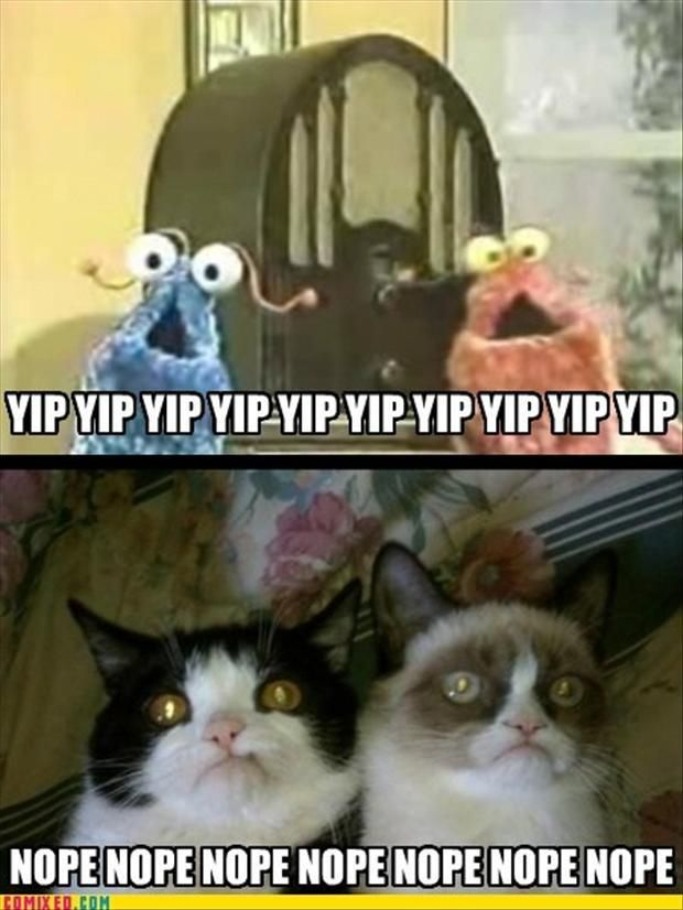 Funny Quotes Grumpy Cat QuotesGram