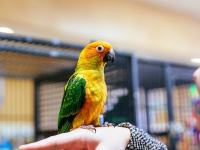 How to Keep Parrots from Getting Bored