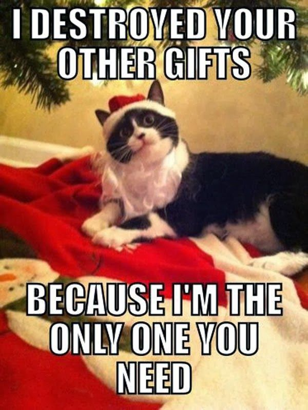 Collect the Beautiful Funny Cat Memes Christmas